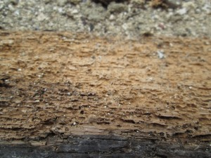 woodworm treatment Hampshire